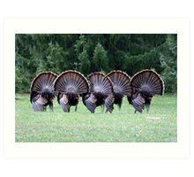 Wild turkey mating dance Art Print