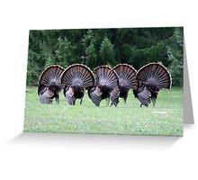 Wild turkey mating dance Greeting Card
