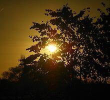 Sunrise Through The Trees by SunriseRose
