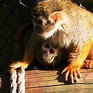 Baby Monkey by mpstone