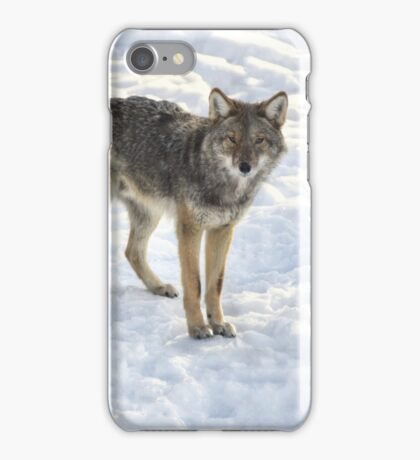 Coyotes  iPhone Case/Skin