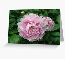 Pink Peonies After Rain Greeting Card