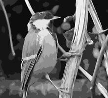"Birds story, "" fawn paint Picasso ! "" 6 (n&b) (h) the Blue Tit - Olao-Olavia by Okaio Créations  by okaio caillaud olivier"