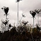 Dried Weeds by Shulie1