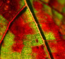 Fall Grape Leaf Sticker