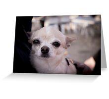 Chihuagua dog Greeting Card