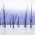 Twigs by Mel Sinclair