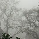 Zero Visibility  by NEmens