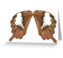 Waiting in the Wings Greeting Card
