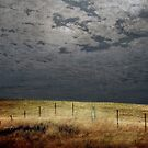 Moonlight Fenceline by Clare Colins