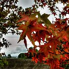 Just Drop In ~ Leaves Fall Colors ~ by Charles & Patricia   Harkins ~ Picture Oregon