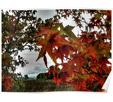 Just Drop In ~ Leaves Fall Colors ~ Poster