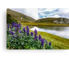 Mountain flowers by a glacial lake Canvas Print