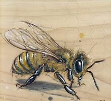 Bee #3 by Fay Helfer