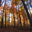 Beautiful Forest by virginian