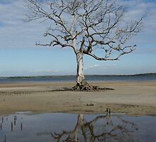 Tree at White Patch, Bribie Island, Queensland. by Ian Hallmond
