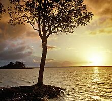 Dawn sentinel. Lake Cootharaba. Queensland. by Ian Hallmond