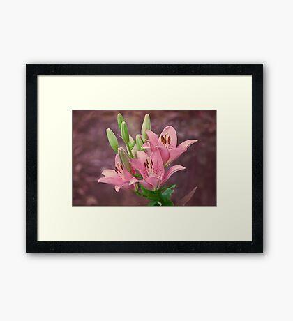 Pink lilies - textured Framed Print