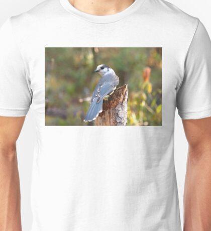 Gray Jay - Algonquin Park T-Shirt