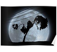 Limbo Tree Poster