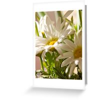 White Daisies Greeting Card