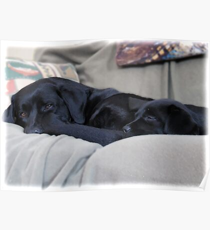 By Your Side - Black Labrador Poster