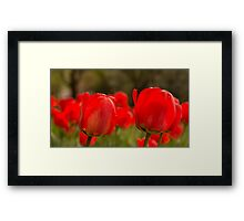 Ile de France Tulips Framed Print