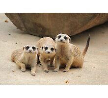 Our Cuteness Comes In A Package Deal, 3 For 1! Photographic Print