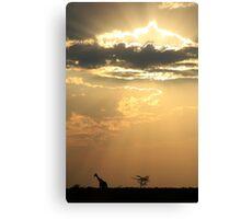 Giraffe Background - Sky Light Wanderer Canvas Print