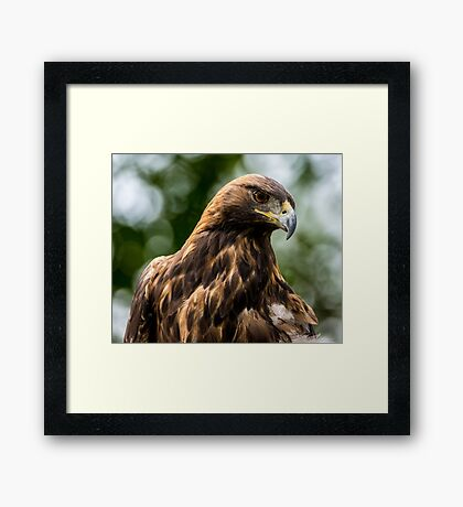 Golden Eagle - Salt Lake City - Utah Framed Print