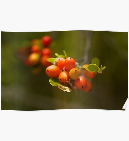 Green Ant on wild berry bunch  Poster
