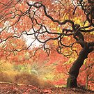 Fiery autumn leaves by miradorpictures