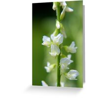 White Sweet-clover Greeting Card