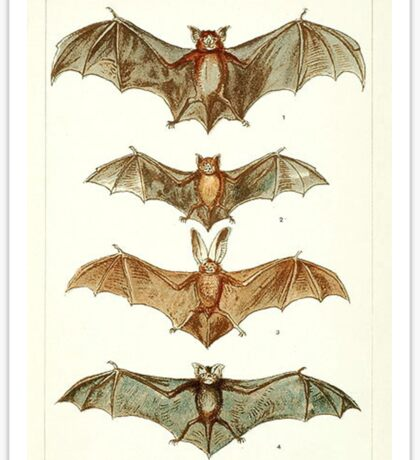 Bat Anatomy Book Plate Sticker