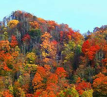 FALL COLOR by Chuck Wickham