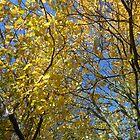 Golden Leaves on Blue Sky by Kathryn Jones