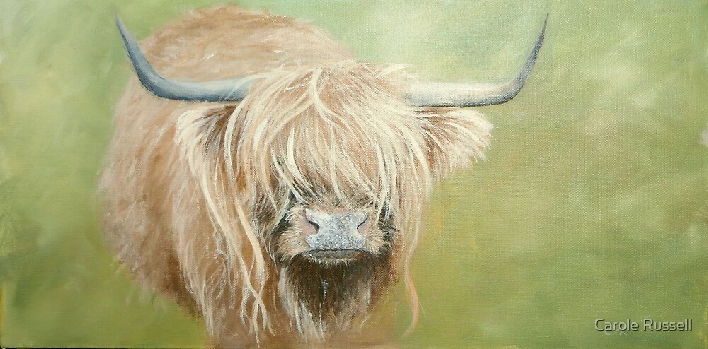 Hairy coo (cow) in grass by Carole Russell