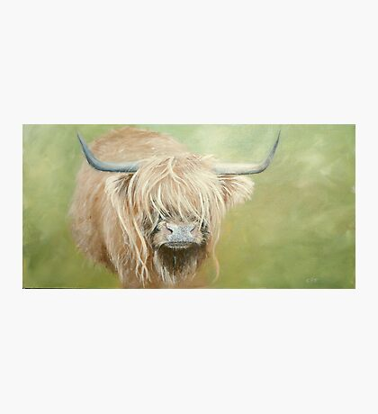 Hairy coo (cow) in grass Photographic Print