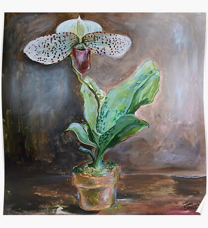Lady Slipper Orchid Flower in Pot Poster