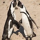 Penguin greeting by Erik Schlogl