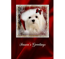 Snowdrop the Maltese Christmas Card Photographic Print