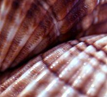 Sea shells by mayalenka