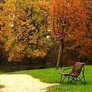 The bench  by annalisa bianchetti