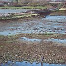 River Test at Totton Southampton by martyee