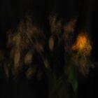 Artscape...............Yellow Rose by Imi Koetz