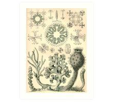 Hexactinellae - Ernst Haeckel  Art Print