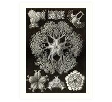 Ophiodea - Ernst Haeckel  Art Print