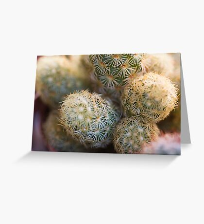 succulent plant Greeting Card