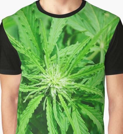 Marijuana Cannabis Weed Pot Plant Graphic T-Shirt