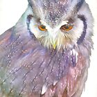 American Eagle Owl 2 by Catherine Hamilton-Veal  ©